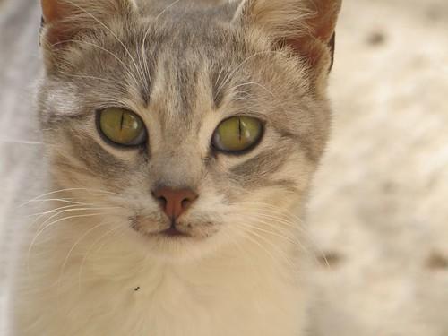La Pepa, Mina en marroqu� ;)