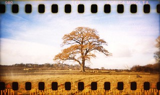 holga | 35mm | sprockets #3