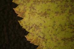 Leaf3b