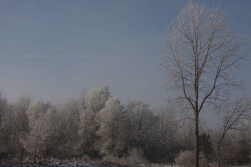 Frozen fog - A view from the yard
