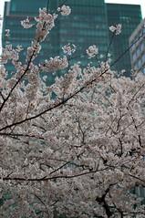 Izumi Sakura