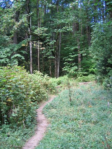 Day 05 - Audubon Forest