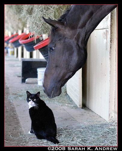Perusal the Horse and Evil the Cat