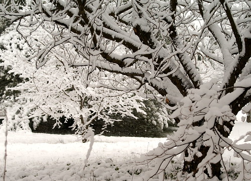 snow08-1