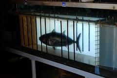 Tuna Flume