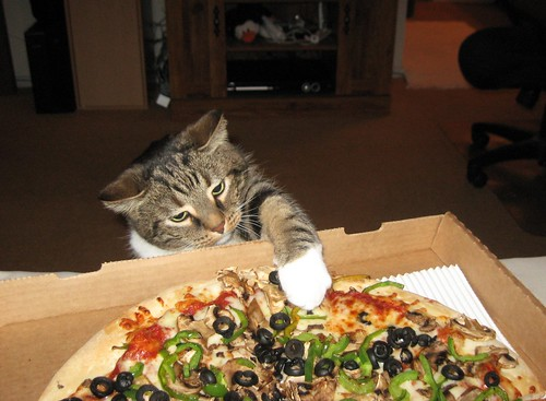 Abby Goes For the Pizza!!!