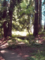 Blake Gardens Redwoods Photo