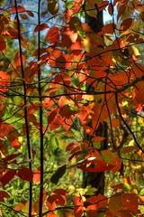 Backlit Leaves HDR