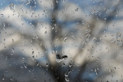Rainy weather 080302 020