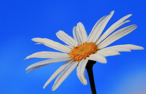 White flower against blue sky