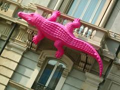 Un coccodrillo in Corso Buenos Aires