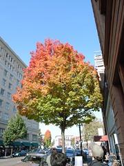 Gradation Tree