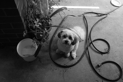 Pogo ready for the gardening