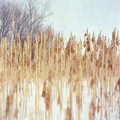 (super ape) Tags: winter snow ny newyork tlr grass rollei reeds bokeh upstate vb gossen wny expiredfilm rolleicord greenhurst lunapro extinctfilm fujinhg400 sheldonhallrd