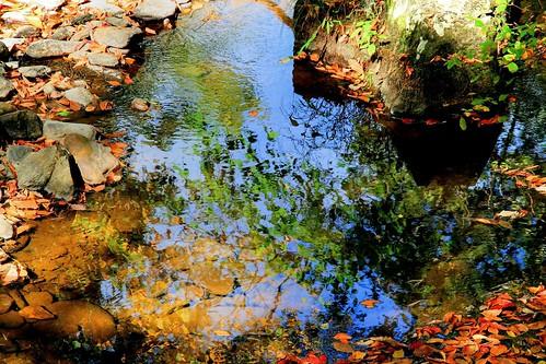 Naturally Fall