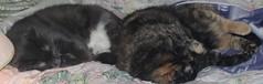 Kitties on the Bed