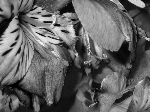 Flowering Present