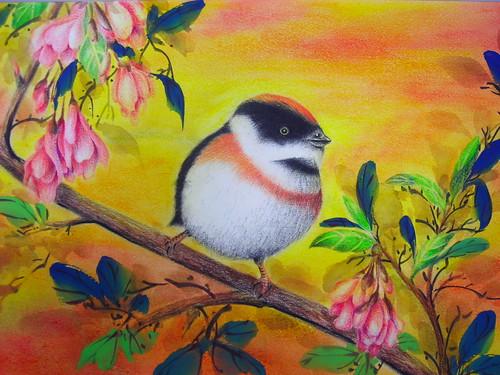 淑珊的枝�小鳥1