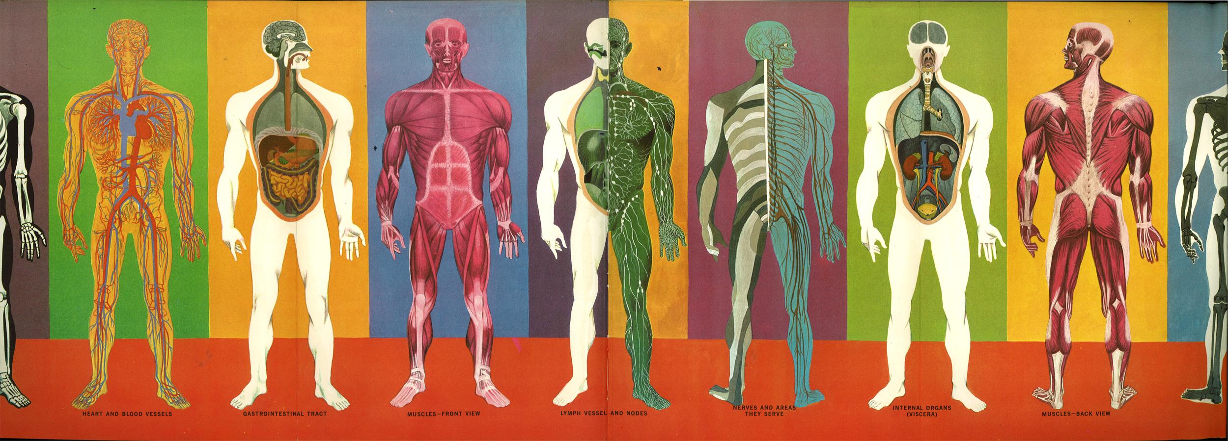 The Ward O Matic The Human Body