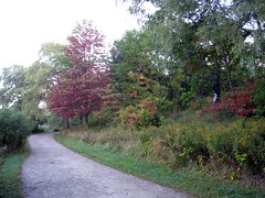 On a little path around Grenadier Pond