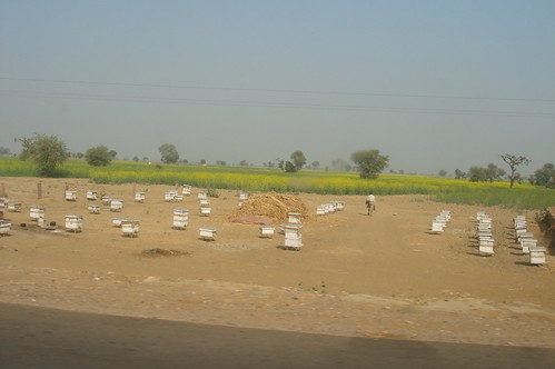 Agra 1-34油菜花田旁的養蜂場
