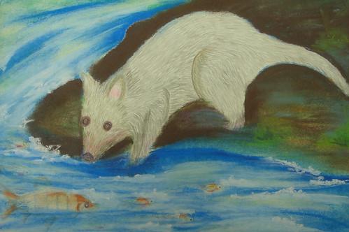 在溪邊想要吃�的狸貓2