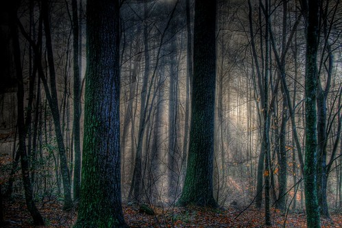 Beware the Misty Wood of Dawn