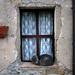 Cat sleeping on window in Saturnia