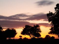 Extremadura, Spanien. December 2007.