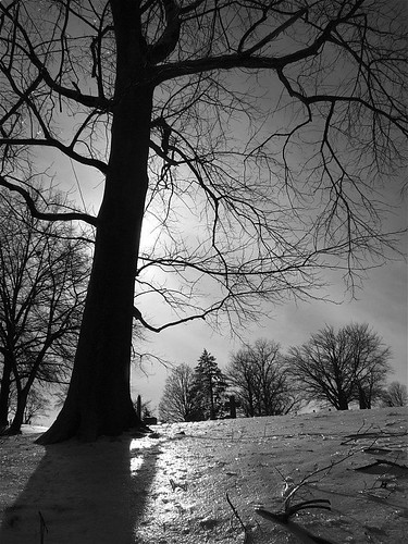 icehilltree.JPG