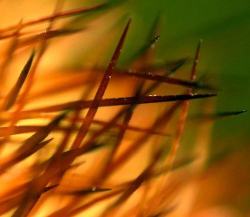 Cactus Needle Bokeh by kevindooley