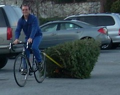 Hauling Christmas tree with bicycle