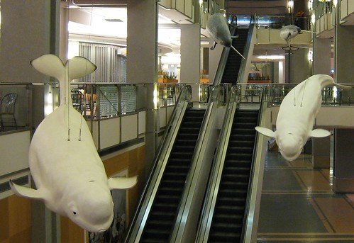 Whales in a mall