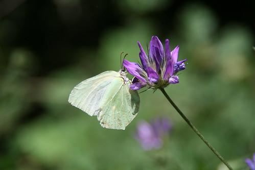butterfly and flower - πεταλούδα και λουλούδι