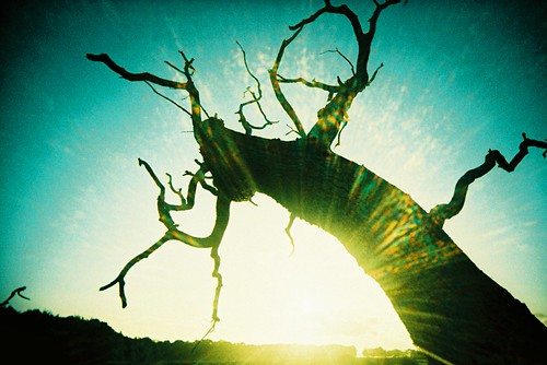 fallen tree by slimmer_jimmer / CC by nc nd 2.0