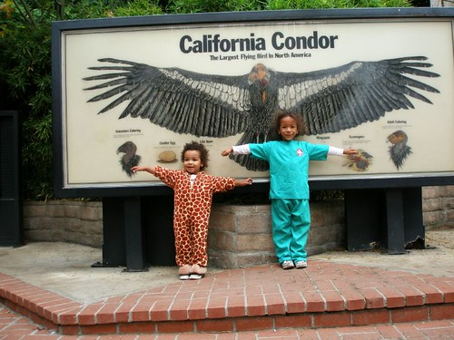 California Condor Babies