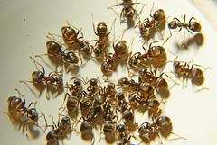Ants-29-05-08 (12)
