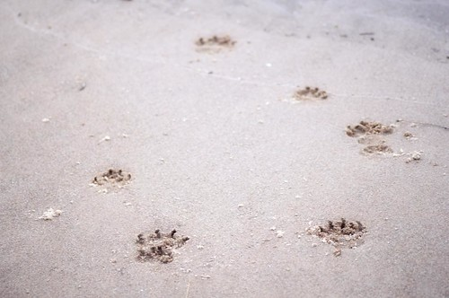 Prints in the Sand