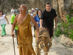 Roo walks Wan the tiger