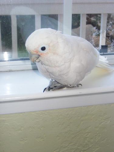 Sydney Bird