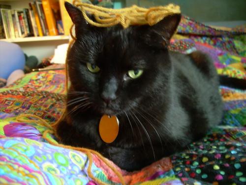 Yarn on my cat