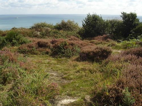 Warren Glen, Hastings Country Park Nature Reserve