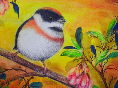 淑珊的枝�小鳥2