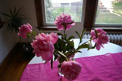 Peonies - Day 5