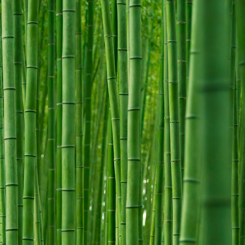 Bamboo --- Growing almost as fast as smartphone ownership :-)