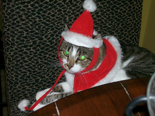 No animals were harmed in the making of Santa Kitty