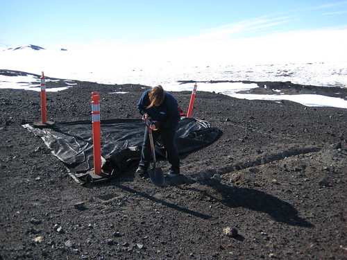 Breana digging permafrost