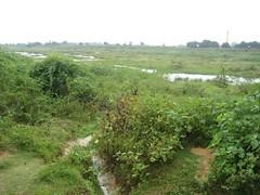 Brahma Aranya River