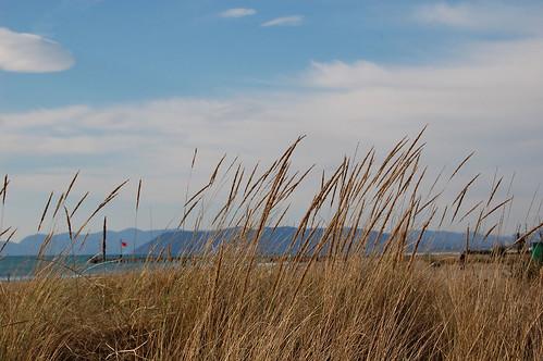 Vegetazione della duna