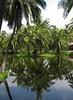 Palm Tree Perfect